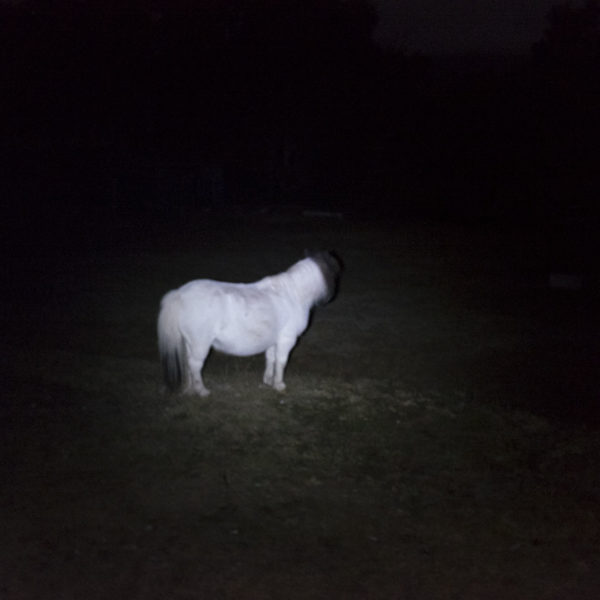 Toby The Haunted white Pony